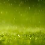green-rain